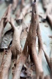 bark peeling