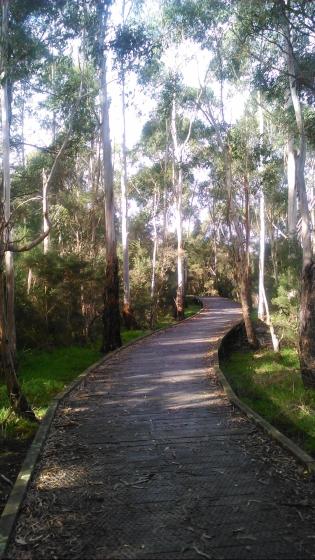 koomba-park-dandenong-creek-trail.jpg