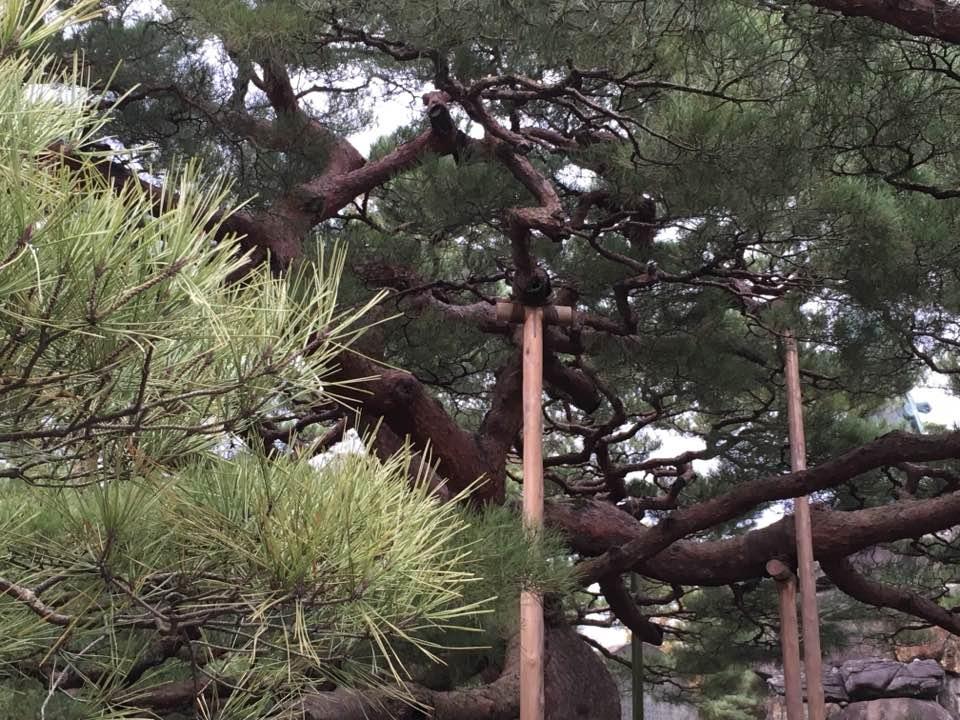 tree with support Gillian Jones