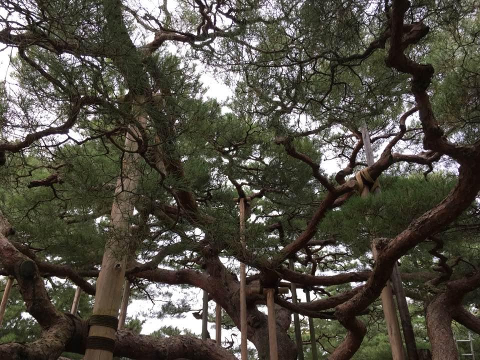 trees with support Gillian Jones